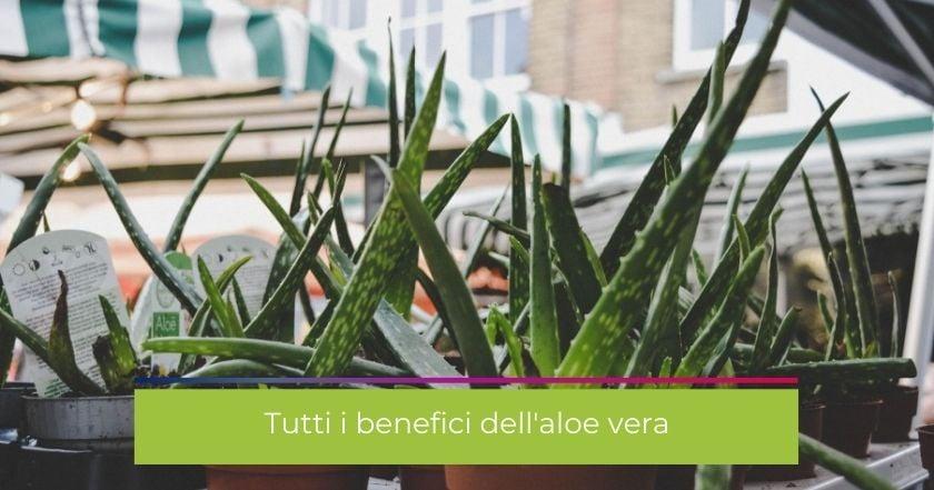 aloe-benefici-pianta-succo