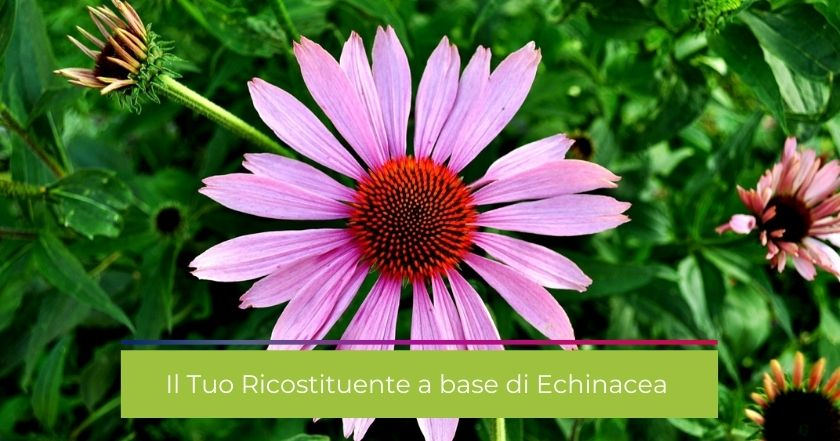 integratori-echinacea-influenza-ricostituente